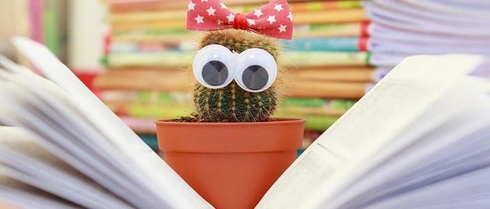cactus-1063094__480