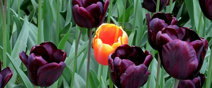 flowers-1575935__480